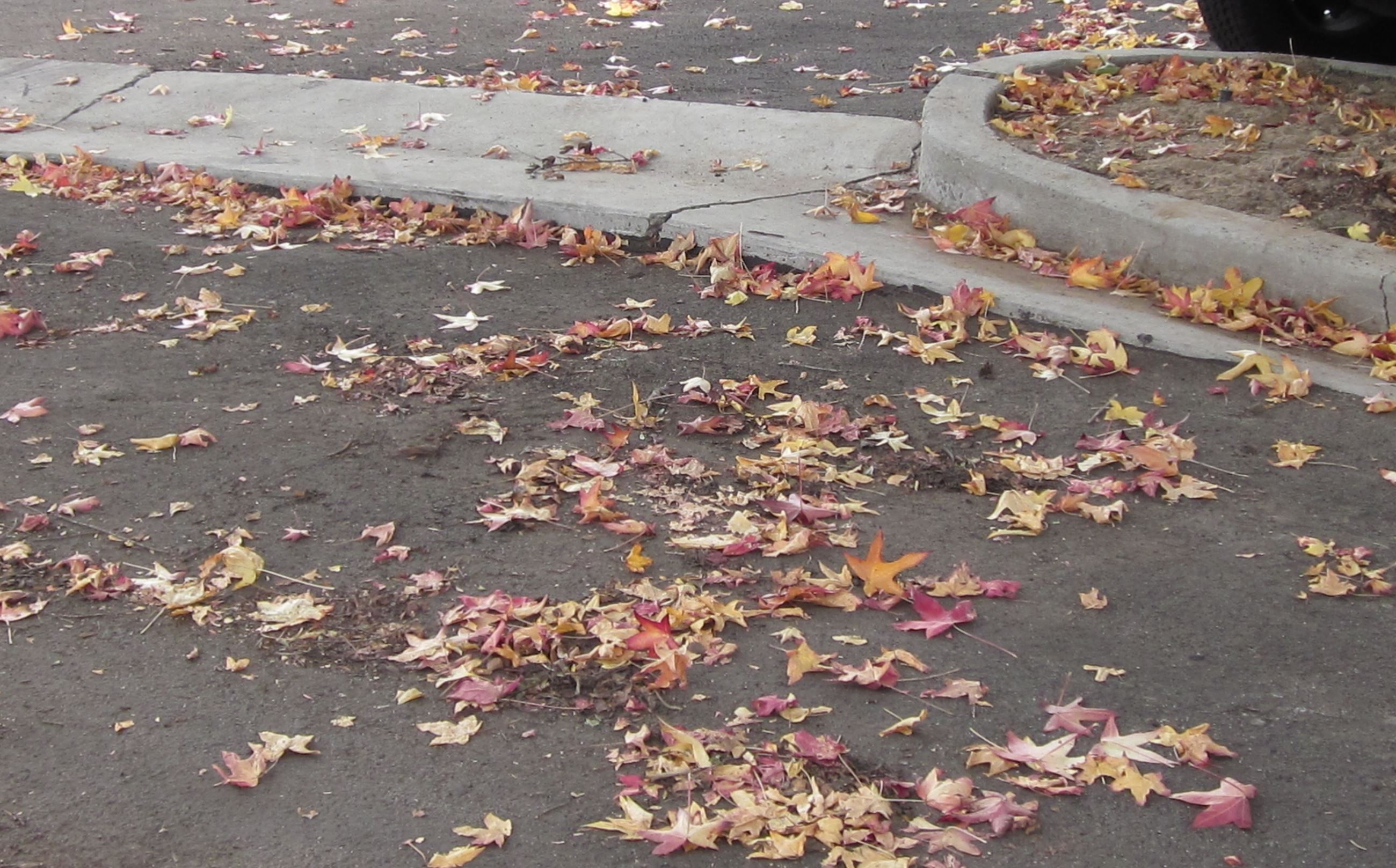Leaves Drainage